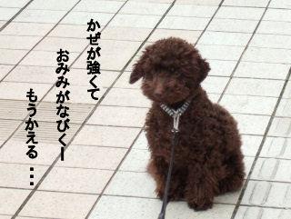 2006_04140015 (2).jpg