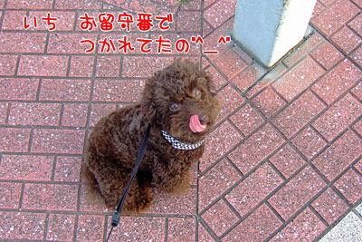 さんぽ11.jpg