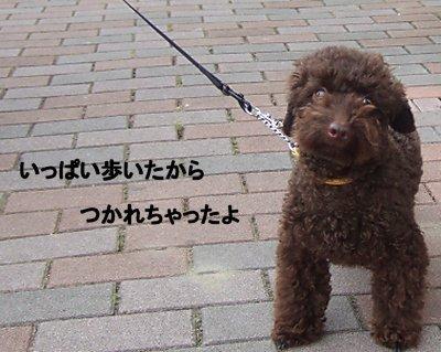 2006_0717早朝散歩0011a.JPG