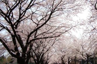 2006_0417那須旅行0081 (2).JPG