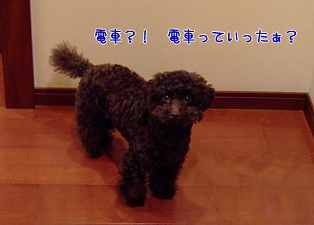 2008_01130009a.JPG