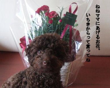 2006_0514母の日0024 (2).JPG