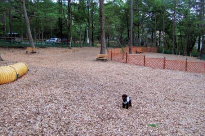 2006_0601山中湖0041A.jpg