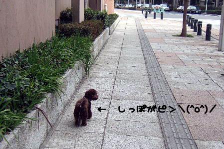2007_03080071a コピー.JPG