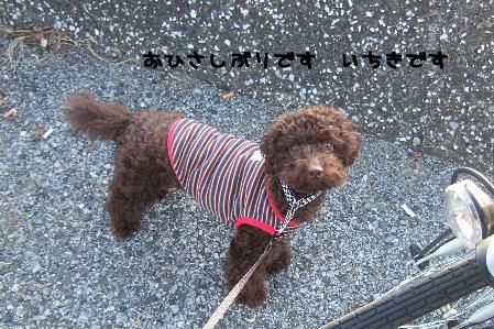 2006_1210shizuokaXmas002 コピー.JPG