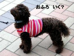 2006_0423お台場・綱吉の湯0017 (2).JPG