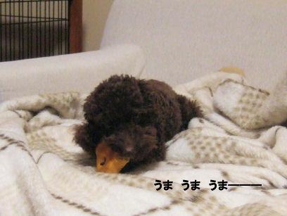 2006_0607お誕生日0019A.jpg