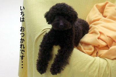 2006_0911ふぉとさいく001 コピー.JPG