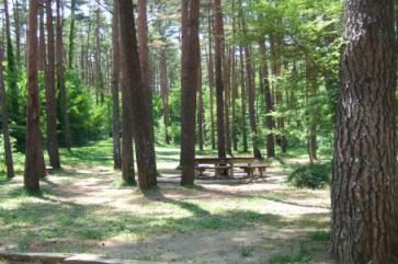 2006_0601山中湖0019A.jpg