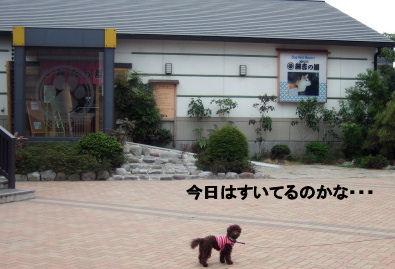 2006_0423お台場・綱吉の湯0018 (3).jpg