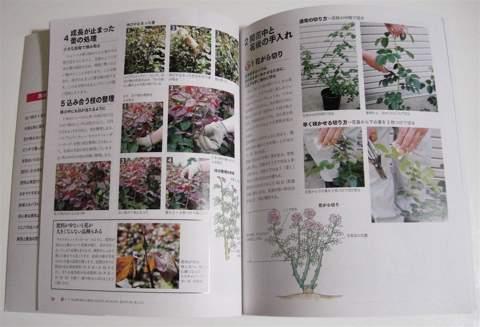 バラを美しく咲かせるとっておきの栽培テクニック02