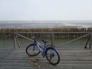 バンコク海と自転車