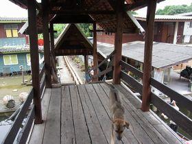 屋根のある橋の番犬?