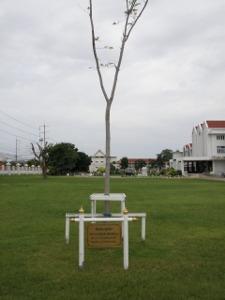 プラドゥーデーンの木