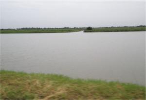 道の両側に池が続きます…