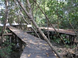 マングローブ林に突入