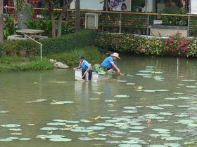 ボンマルシェ市場の池を清掃する舟