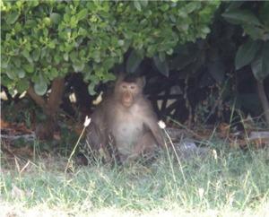 親猿が睨んでます(汗)