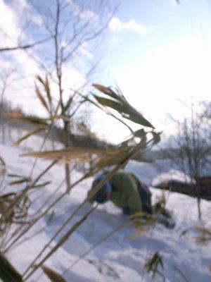 snowdash2