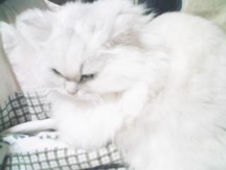 フィーナさん 2007-02-20-11