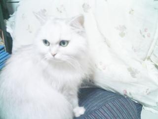 フィーナさん 5