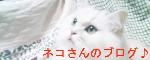 ネコさんのブログ♪