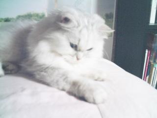 フィーナさん 2007-01-18-02