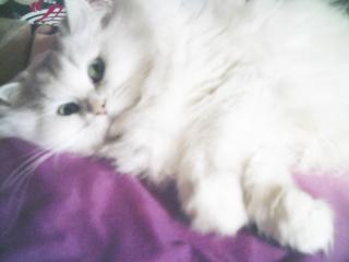 フィーナさん 2007-02-23-05