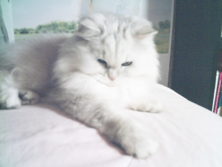 フィーナさん 2007-01-18-03
