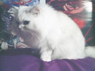 フィーナさん 2007-02-19-06