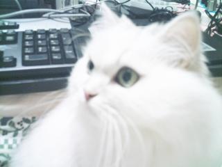フィーナさん 2007-02-14-01