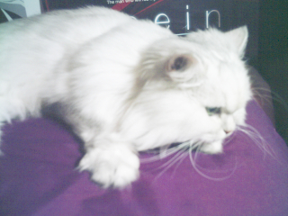 フィーナさん 2007-02-16-02