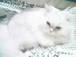 フィーナさん 2007-02-14-03