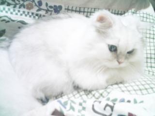 フィーナさん 2007-02-14-04