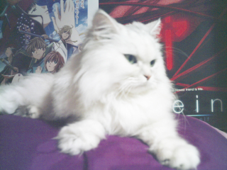 フィーナさん 2007-02-16-04