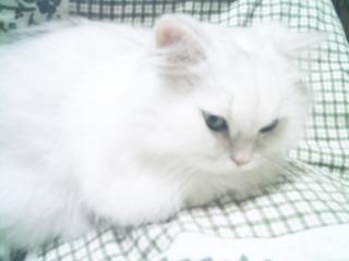 フィーナさん 2007-02-14-05