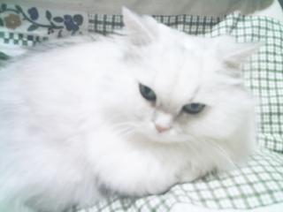 フィーナさん 2007-02-14-06