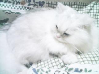 フィーナさん 2007-02-14-07
