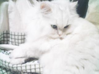 フィーナさん 2007-02-21-01