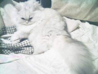 フィーナさん 2007-02-21-03