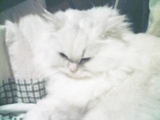 フィーナさん 2007-02-21-04