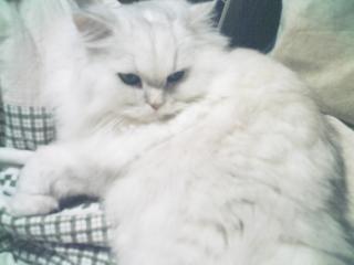 フィーナさん 2007-02-21-05
