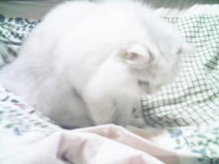 フィーナ 2007-02-17-13