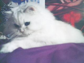 フィーナさん 2007-02-19-13