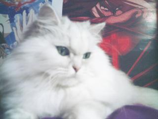 フィーナさん 2007-02-19-17