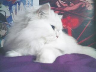 フィーナさん 2007-02-19-19