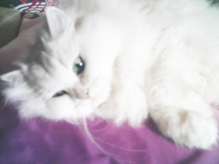 フィーナさん 2007-02-23-21