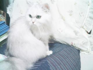 フィーナさん 3