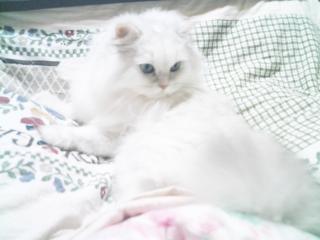 フィーナさん 2007-02-17-11