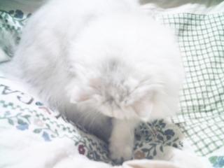フィーナさん 2007-02-17-12